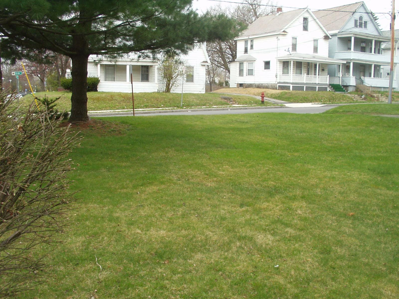 Mousse pelouse chroniques am ricaines for Recherche tonte de pelouse